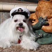 Captain Maltese Dog  Art Print