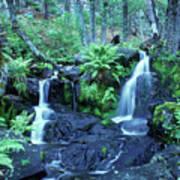 Cascade Creek And Ferns  Art Print