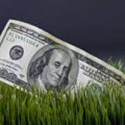 Cash In The Grass. Art Print