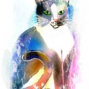 Cat Of Many Colors Art Print