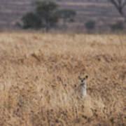 Cheetah In The Tall Grass Art Print