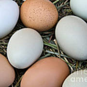Chicken Eggs Art Print