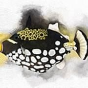 Clown Triggerfish No 01 Art Print
