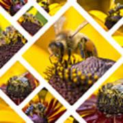 Collage Of Western Honey Bee Art Print
