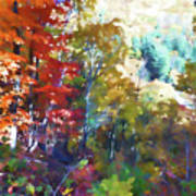 Colorful Autumn Trees In Forest Art Print