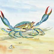 Colorful Blue Crab Art Print
