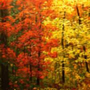 Colors Of Autumn II Art Print