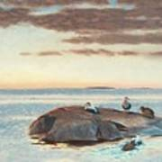 Common Eiders On A Rock Art Print