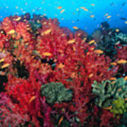 Coral Reef Scene Art Print
