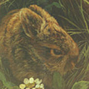 Cottontail Young Art Print