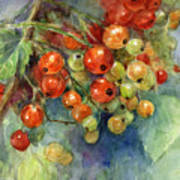 Currants Berries Painting Art Print by Svetlana Novikova