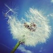 Dandelion And Blue Sky Art Print by Matthias Hauser