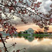 Dc Cherry Blossoms Art Print