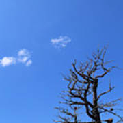 Dead Tree And Two Clouds Art Print