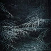 Deep In Woods Art Print