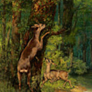 Deer In The Forest, 1868 Art Print