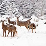 Deer In The Snow Art Print