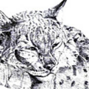 Deer Tiger Art Print