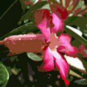 Desert Rose  Adenium Obesum Art Print