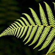 Detail Of Asian Rain Forest Ferns Art Print