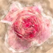 Digitally Manipulated Pink English Rose  Art Print