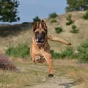 Dog Leaping Art Print