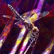 Dragonfly Insect Close  Art Print