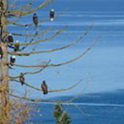Eagle Tree By The Salish Sea Art Print