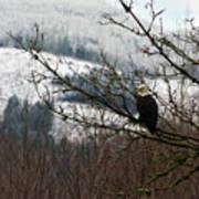Eagle Watching Art Print