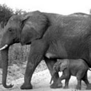 Elephant Walk Black And White  Art Print