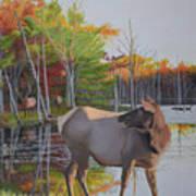 Elk Country Evening Art Print