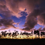 Everglades Sunset Art Print