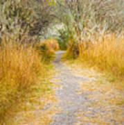 Fall Pathway 3 Art Print
