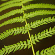 Fern Pattern Art Print