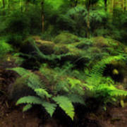 Ferns Of The Forest Art Print