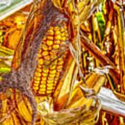 Field Corn Ready For Harvest Art Print