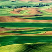 Field Of Green Art Print