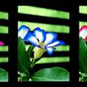 Floral Triptych Art Print