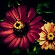 Flowers Lighting Up The Darkness Art Print