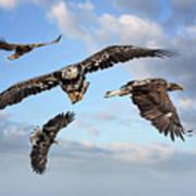 Flying Eagles Art Print
