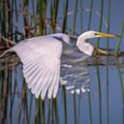 Flying Egret Art Print