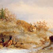 Fox And Pheasants In Winter Art Print