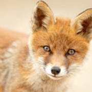 Foxy Face Art Print