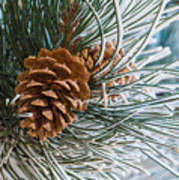 Frosty Pine Needles And Pine Cones Art Print