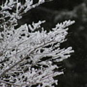 Frozen Branches Art Print