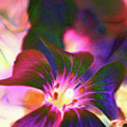 Garden Glow Art Print