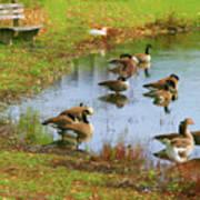 Geese Lake Fall  Art Print