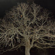 Ghostly  Tree Art Print