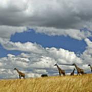 Giraffes On The Horizon Art Print