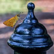 Golden Moth Art Print
